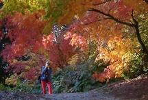 Botanical Gardens, Arboretums and Gardens