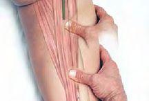 Basic Clinical Massage Therapy / welke spieren/punten bevinden zich onder je handen