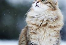 sneeuwpoes