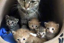 коты,кошки и котята