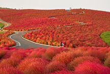 Japan for a Visit
