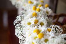 F / 花/植物/花と人