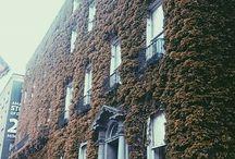 Dublin's photo