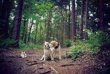 Porthos & Lucy