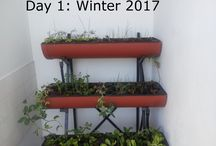 Time line of Heever Hydroponics / Although not the best time of year (Winter), I decided to show the growth rate of a variety of plants in the Heever Hydroponic system. This particular set of events are via Hydroponic (nutrient rich water) method. The next set on the same system will probably be via Aquaponics and the next a potential solution for space.All on the same system? YES! For your perfect system, go to  www.heeverhydroponics.com or watch an introduction: YouTube: https://www.youtube.com/channel/UCzXJPHqwTX7nQL5tcDji7Yg