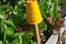 Natural pesticide