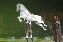 Cavalo Lusitano / Cavalo Lusitano