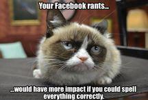 Grumpy Cat! / Hilarious!