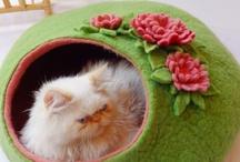 Pelíšky pro psy a kočky