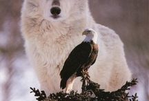 wolven en roofvogels