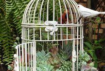 gabbietta uccellini