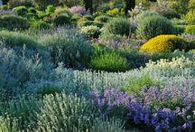 dry mediterranean garden