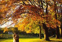 Syksy -häät - Fall wedding / Fall wedding