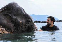 Travel with Heart: Wildlife; Loving & Protecting All / wildlife, animals, ocean, romantic travel, sanctuaries, rescues, awareness