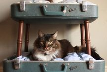 Cat trees and beds