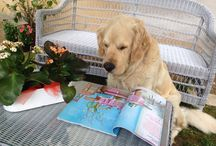 Foto canine / Scatti di quotidianità canina