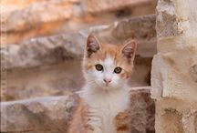 Cutest cats EVER! / Aww! Adorable pics of kittens, cute kitty cat photo heaven! Funny photos of cats