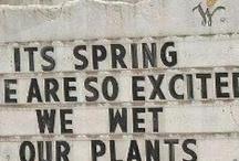 Gardening / by Heidi Florence
