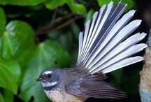 Native Fauna & Flora from Aotearoa New Zealand