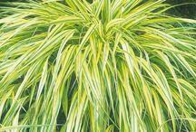 *Grasses*