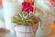 succulents | cactus