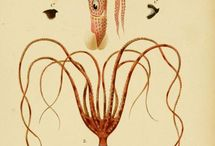 Zoologie-Botanique