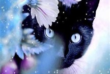 All God's Critters - Kitties/Black/White / by Kay Hough