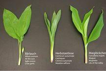 Pflanzen / Pflanzenportraits