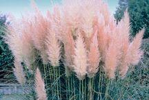trawy dekoracyjne, ogród