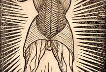 Anatomia Carpi / Jacopo Berengario da Carpi: Isagogae breues, perlucidae ac uberrimae, in anatomiam humani corporis a communi medicorum academia usitatam