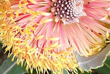 Pollinating the Planet with Love / Flower Power 4 Pure Love ~ Learning Life Lessons from Flowers