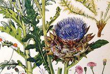 Prints / by Barbara Hellinga