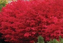 buske og blomster