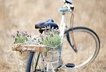 Bike / by Anne Exley