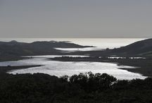 Taynish NNR, Argyll. / Taynish National Nature Reserve.