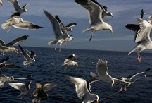 Gulls / by Sarah Kausmally