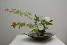ikebana / Japanese flower arrangement