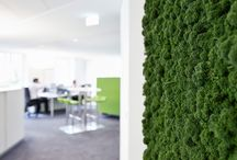 Innerspace Moss Panels for Interiors
