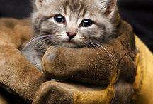 saving kittens