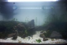my aquascape / the design layout a original my idea not copy from other people