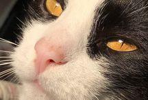 I miei gatti / Bis-Sic-Schizzo