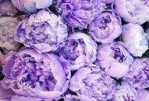 #flowers #food #fantasy #fabric #fabric