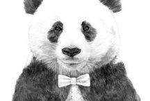 Panda b&w