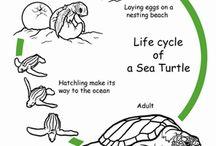 Montessori zoologia