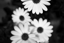 Black 'n Whites / Flowers