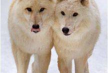 Misty wolfs