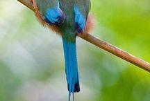 Birdies / by Heather Ready