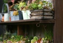 Fleurs et succulentes