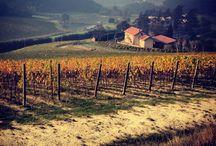 Autumn & Harvest in Bollina