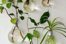 deco/plante interieure